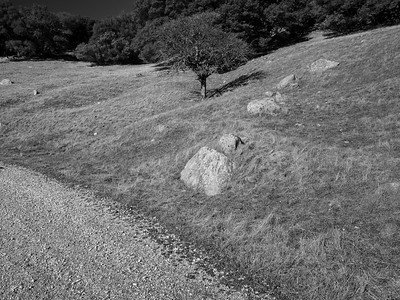 Whipsnake Loop Trail. Los Vaqueros Watershed - Contra Costa County, CA, USA