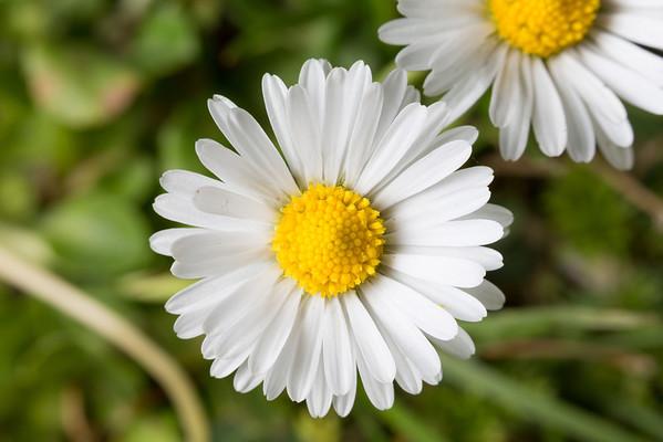 Flowers. Shadow Cliffs Regional Park - Pleasanton, CA, USA