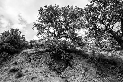 Storm damage from the recent SF Bay Area mega storms. Ohlone Road. Sunol Regional Wilderness - Sunol, CA, USA