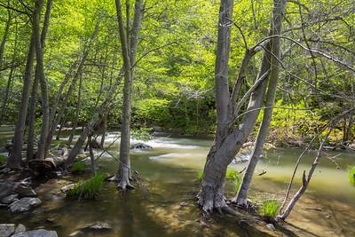 Creek. Near Ohlone Road. Sunol Regional Wilderness - Sunol, CA, USA