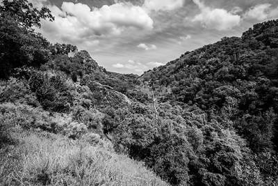 Near Ohlone Road. Sunol Regional Wilderness - Sunol, CA, USA