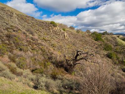 McCorkle Trail. Sunol Regional Wilderness. Sunol, CA, USA