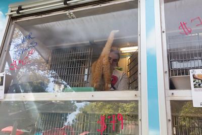 Cat. Bay Area Pet Fair 2017 - Alameda County Fairgrounds - Pleasanton, CA, USA
