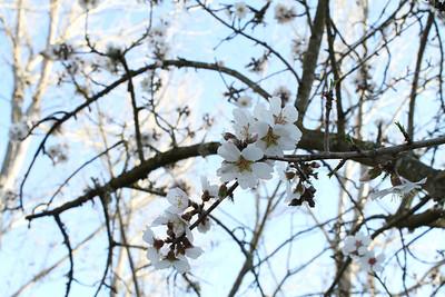 Flower. Arroyo Del Valle Trail - Pleasanton, CA, USA