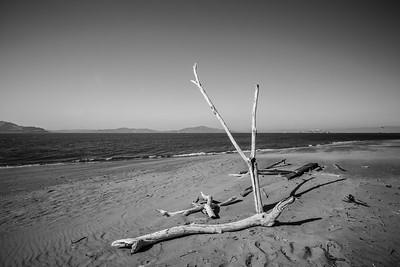 Driftwood & Alcatraz Island (right). Crissy Field East Beach. San Francisco, CA, USA
