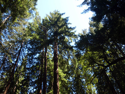 Muir Woods National Monument - Mill Valley, CA, USA