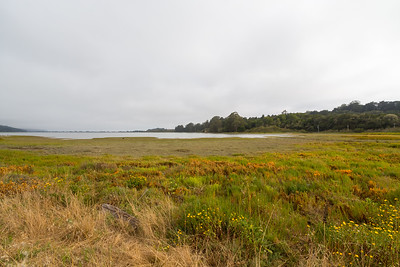 Bolinas Lagoon. Wilkins Gulch - Bolinas, CA, USA  Photo shot on the side of SR-1.