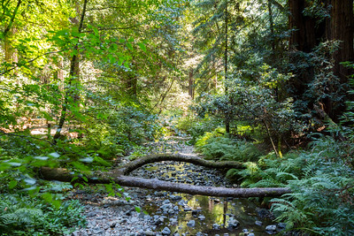 Muir Woods National Monument - Mill Valley, CA