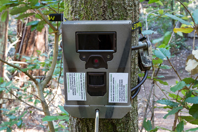 Wildlife Camera. Muir Woods National Monument.