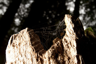 Spider Web. Muir Woods National Monument.