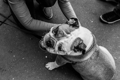 Dog. Near Ferry Building. San Francisco, CA, USA