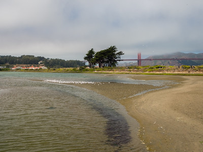 Golden Gate Bridge & Crissy Field Marsh. Crissy Field. San Francisco, CA, USA
