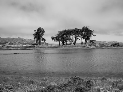 Crissy Field Marsh. Mason Street. San Francisco, CA, USA