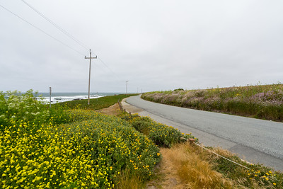 Wild Flowers. Near Pigeon Point Lighthouse. Pescadero, CA, USA
