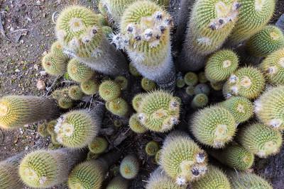 Desert Garden. Huntington Library, Art Collections, and Botanical Gardens - San Marino, CA, USA