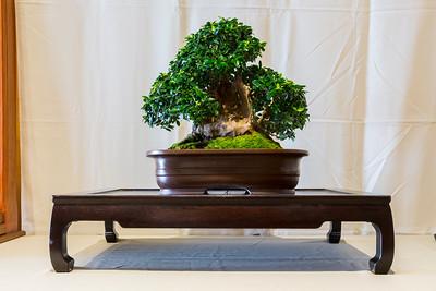 Huntington Library, Art Collections, and Botanical Gardens - San Marino, CA, USA