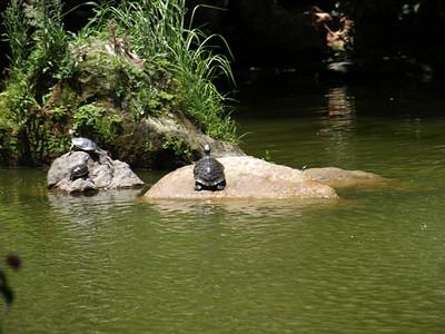Turtles. Taipei, Taiwan (台北,台湾)