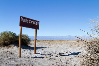 Devils Corn Field. Death Valley National Park