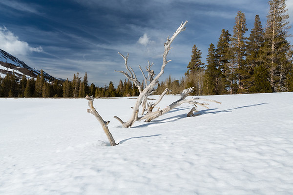 Red Lake. Humboldt-Toiyabe National Forest, CA, USA