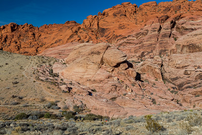 Calico Hills South Parking Lot. Red Rock Canyon National Conservation Area. Las Vegas, NV, USA  Plants: Joshua Tree (Yucca brevifolia) & other desert plants.