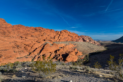 Calico Hills North Parking Lot. Red Rock Canyon National Conservation Area. Las Vegas, NV, USA  Plants: Joshua Tree (Yucca brevifolia) & other desert plants.