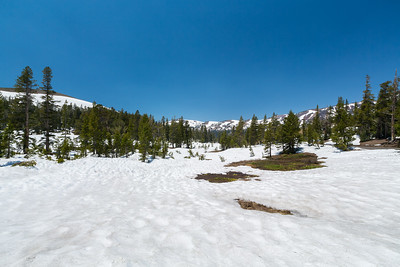 Sonora Pass near SR-108. Stanislaus National Forest, CA, USA