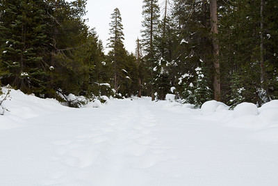 Road for Lake Alpine East Shore. Stanislaus National Forest, CA, USA