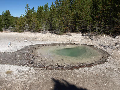 Veteran Geyser. Norris Geyser Basin - Yellowstone National Park