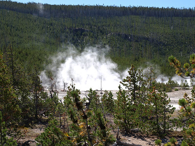 Norris Geyser Basin - Yellowstone National Park