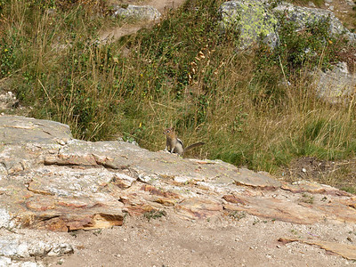 Chipmunk. Inspiration Point. Grand Teton National Park