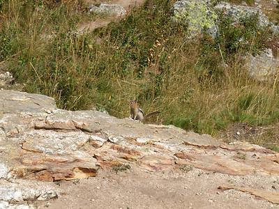 Chipmunk. Inspiration Point. Grand Teton National Park