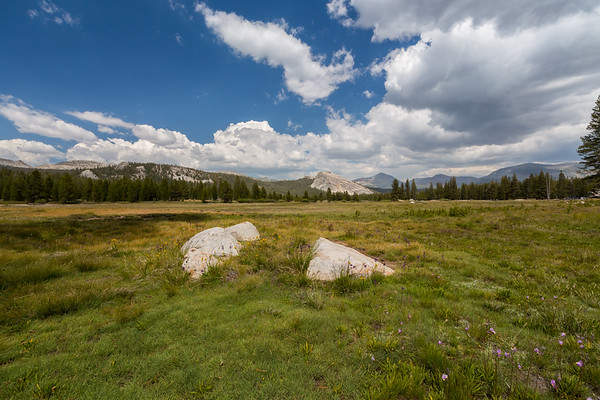 Lembert Dome & Tuolumne Meadows. Near Tioga Road (SR-120). Yosemite National Park, CA, USA