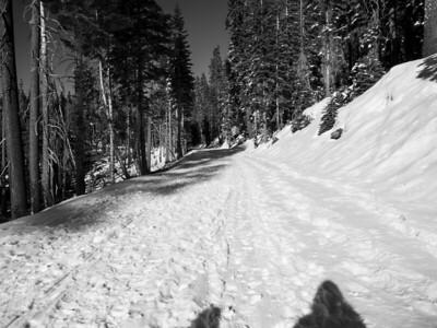 Glacier Point Road (Winter Trail). Yosemite National Park, CA, USA