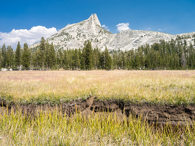 CATHEDRAL PEAKS MEADOW