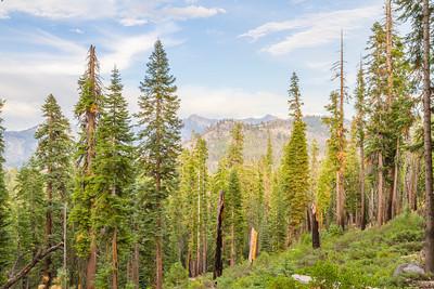 HDR Composition. Trail to Mono Meadows - Yosemite National Park - California, USA