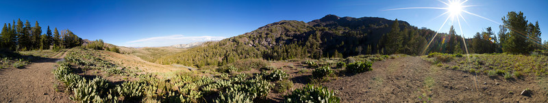 Panorama. Sonora Pass/Toiyabe National Forest. Road to Mono Lake, CA