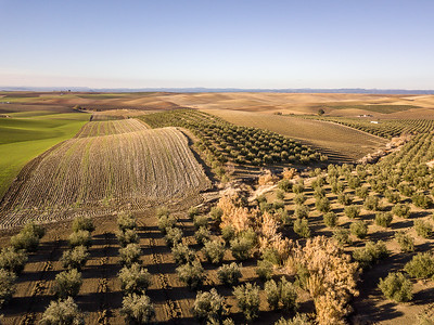 The Fields of Andalucia