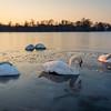 A Frozen Morning in Kensington Gardens, London