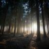 2017.03 - Lulworth Forest II