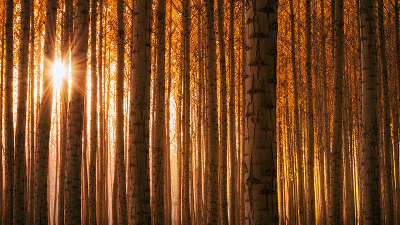Rhythms Of Autumn