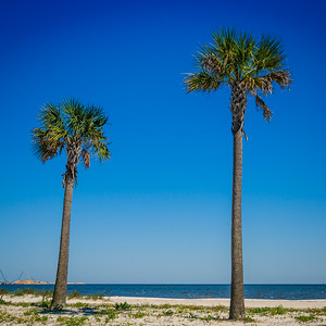 Two Gulfport Palms