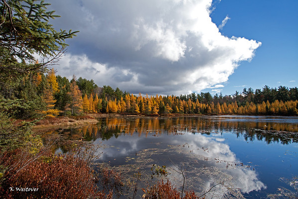 """""""The bog"""" on a beautiful autumn day."""