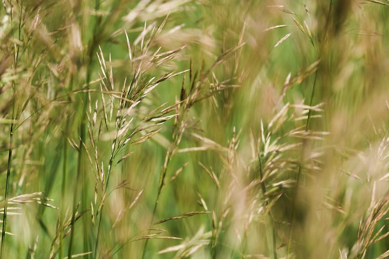 Summer Breeze In The Grass