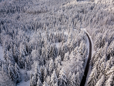 Deep in the Black Forest, Germany