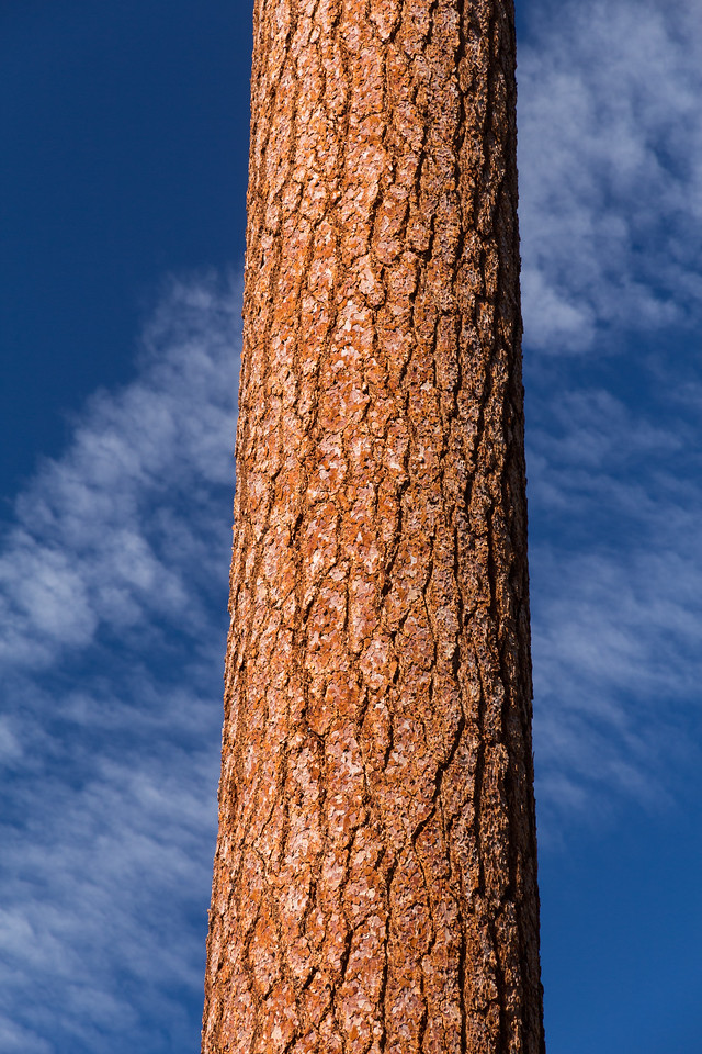 Trunk and Sky