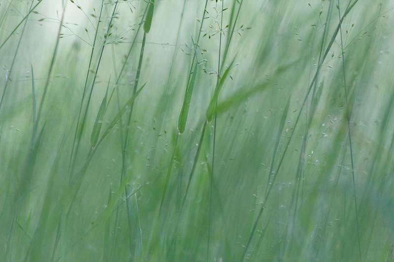 Cool Grass