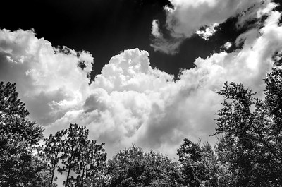 Clouds Trees Black White