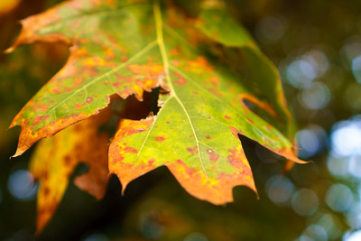 Fall Colors in Kew Gardens, London