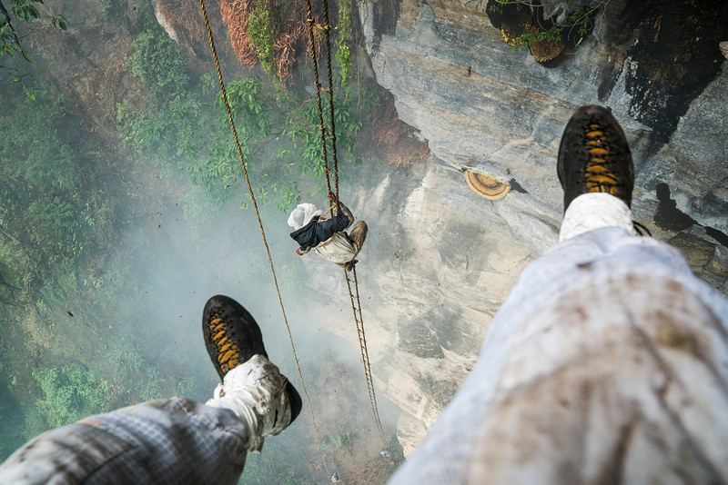 """Mauli Dhan, the last honey hunter, at the first of three harvest locations.  The team at the base lights smoke to smoke out the bees and Mauli makes his initial climb up the free hanging ladder.  After cllimbing up the ladder from below his must first tie himself off to a small vine tree to get him closer to the hive on this severly overhanding cliff. The frist step is to chat a mantra for the bees to leave peacefully and brush off the bees with a bamboo pole in gaint clumps.   He pokes cotter pin-like pegs through the six-foot-wide, half-moon shaped hives, then attaches the pegs to a bamboo rope managed by an assistant above. The final step is to sever the hive from the wall. Maule cries out 'Yuwa ke!' """"(it has fallen!)"""" This call, echoed by the other honey hunters, rings out across the jungle, while the hive is carefully lowered to the ground.  Then he must  scrape the best honey off from the roof of the overhang.  His basket has ropes going to the top for his team to take the weight as he controls it and communicates.   Each time he communicates with his team above he must lean back to yell up.  Its an intese core wrenching position and the small rope he has hooked around his armpits for protection cuts his skin to near the bleeding point., myngmedit"""
