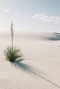 Solitary, White Sands National Monument, New Mexico
